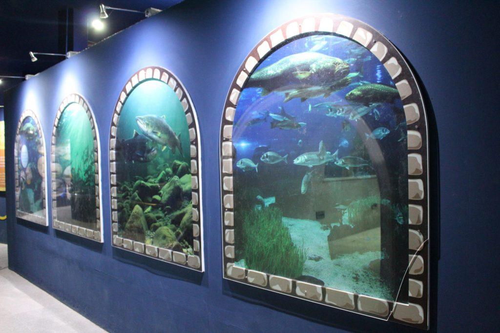 นิทรรศการ อาคารปลา_๒๐๐๓๐๖_0020