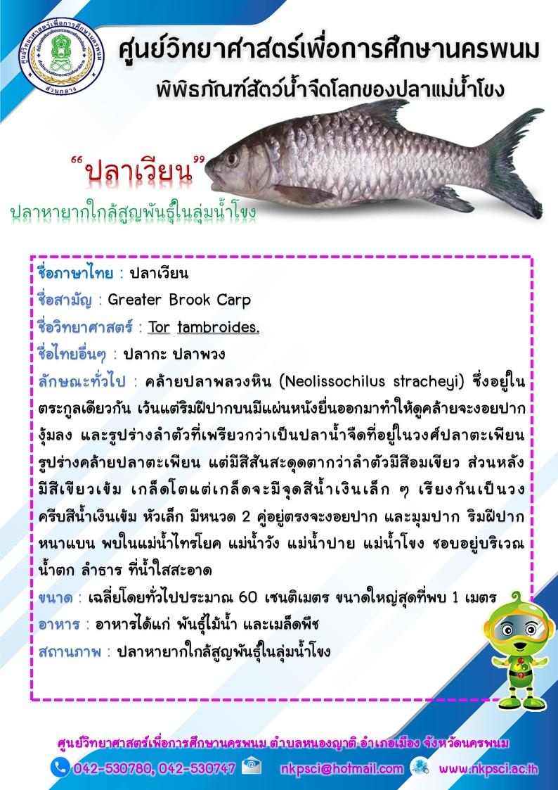 ปลาเวียน
