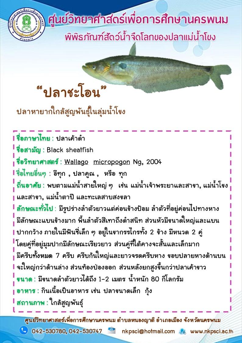 ปลากระโชน
