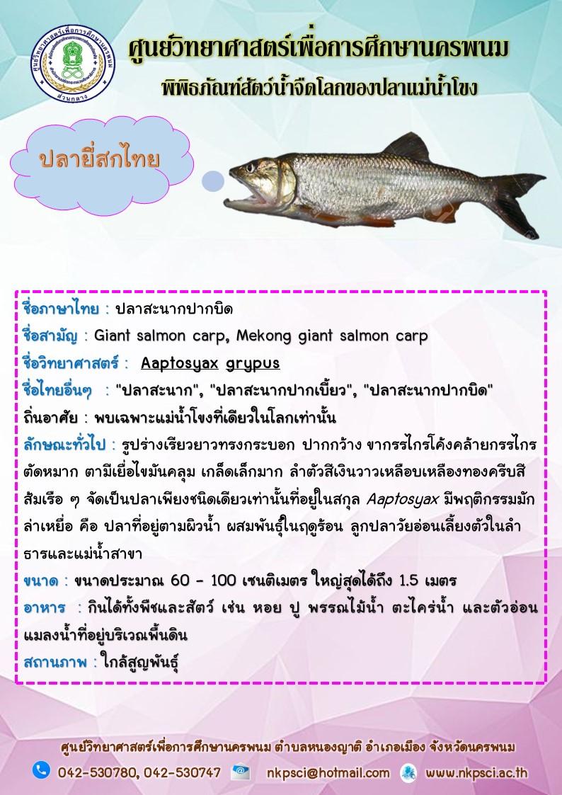 ปลาชะโอน