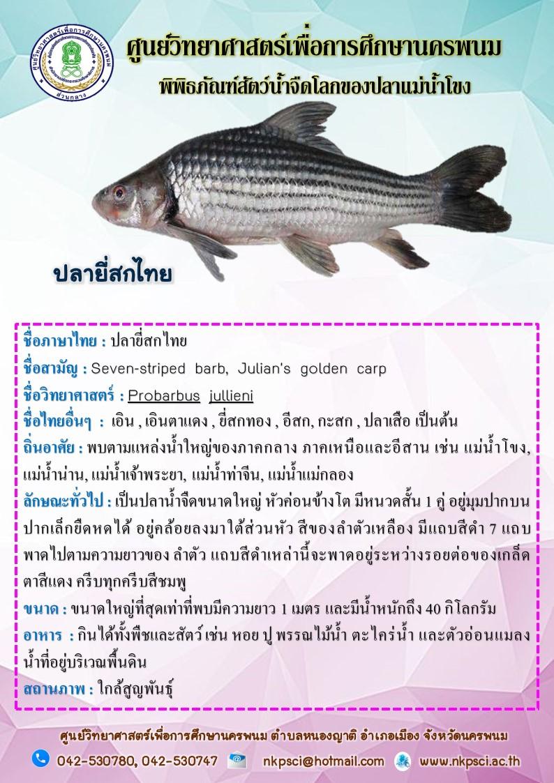 ปลายี่สกไทย