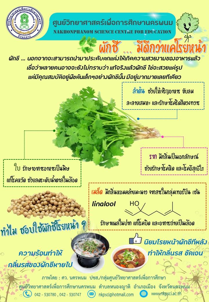ประโยชน์ของผักชี