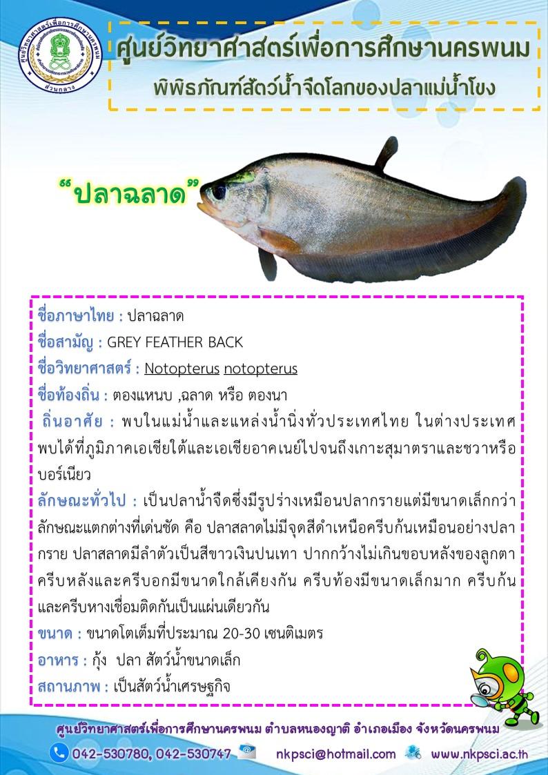 พันธ์ปลาฉลาด